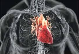 Propolis dan 5 Makanan/Minuman Pencegah Penyakit Jantung 1