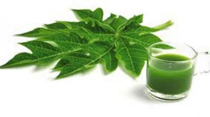 Cara membuat jus daun pepaya Untuk Demam Berdarah 1