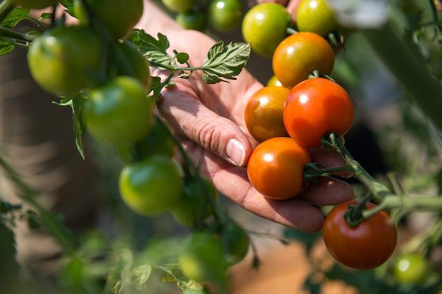 Makanan yang dapat meningkatkan produksi kolagen